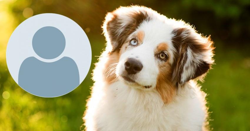 Jaké plemeno psa se k tobě hodí?